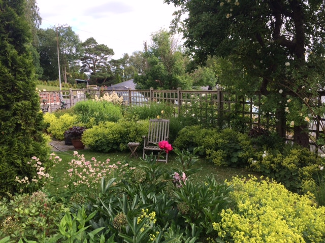 JD nedre trädgården i juni