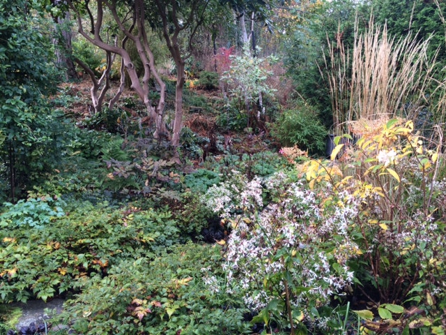Skogsaster oktober 2