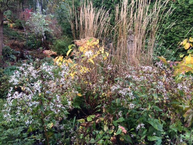 Skogsaster oktober vita rabatten