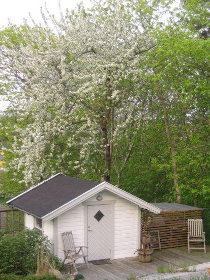 De vilda fågelbären skummar i vitt bakom lillstugan.