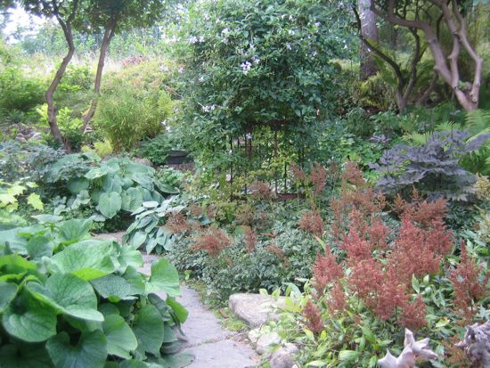 I eftermiddagens motsol lyser astilbens fröställningar i kopparbrunt och tar upp färgen från det rostiga klätterstödet intill.