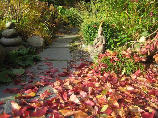 Vildvinet lägger ut en röd matta framför Buddha.