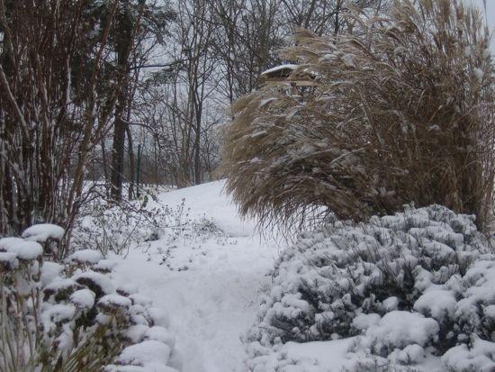 Miscantus Kleine Fontäne i vinterskrud