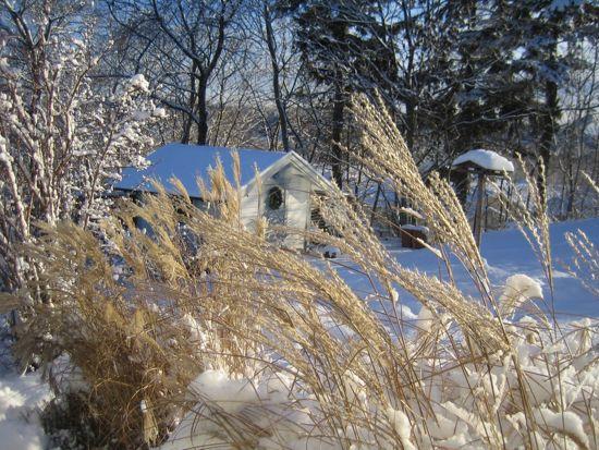 Miscantus 'Kleine Fontäne' i vinterpäls.