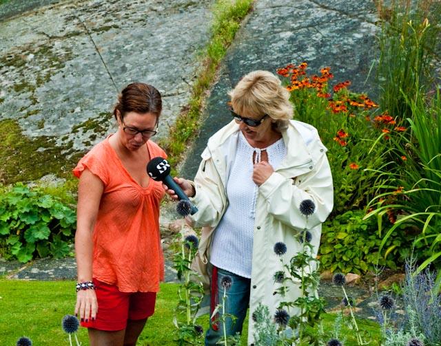Maria Wendehög från Sveriges Radio undrar om bolltisteln är en ökenväxt? Den har hur som helst en given plats i den torra och soliga sydrabatten.